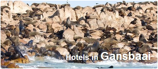 Hotels in Gansbaai